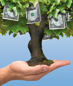 Money tree held in the palm of a hand
